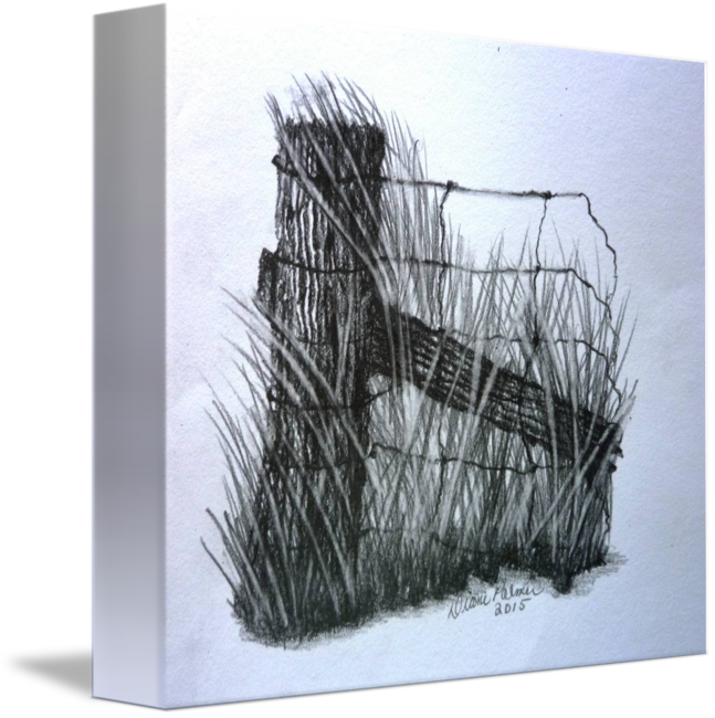 647x650 Old Farm Fence Pencil Drawing By Diane Palmer