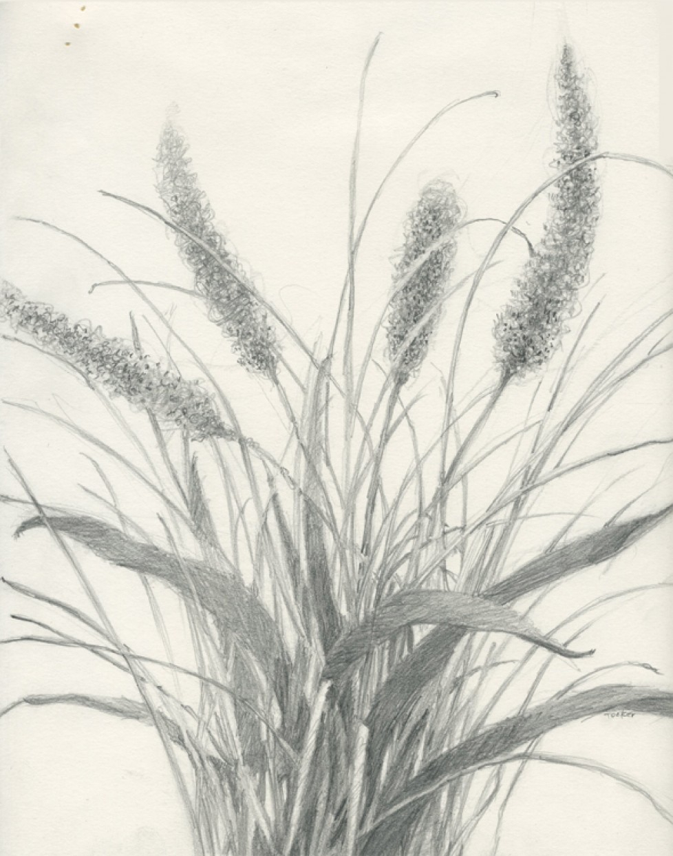 978x1243 Drawing Grass In Pencil How To Draw Grass