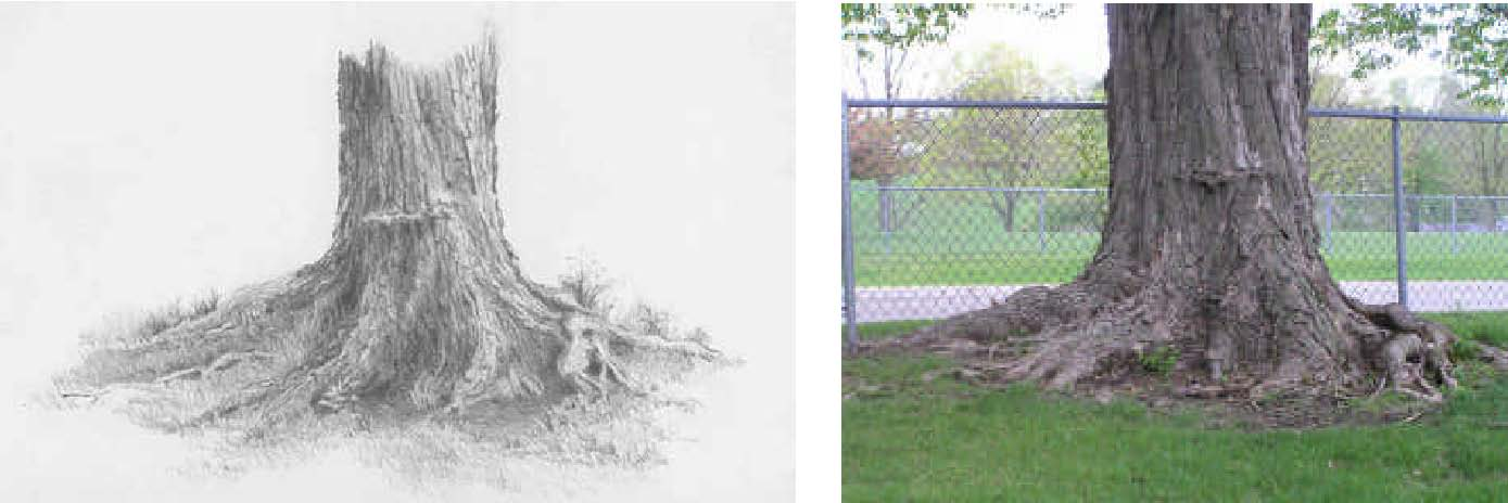 1389x464 How To Draw Trees With Pencil