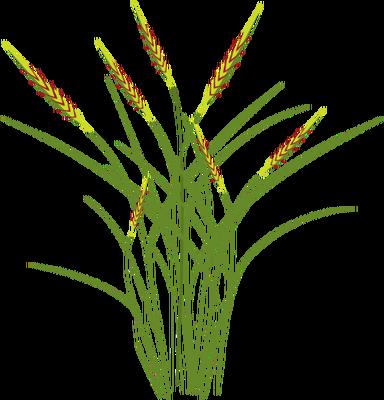 384x400 Index Of Ress Tice1 Partagevisuelian Symbolsfloragrasses