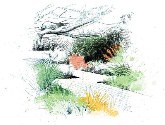 564x425 Ornamental Grasses Drawing David Despau , Les