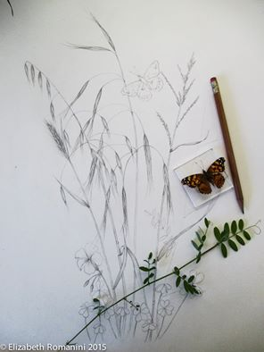 296x394 Painted Lady Butterfly With Grasses