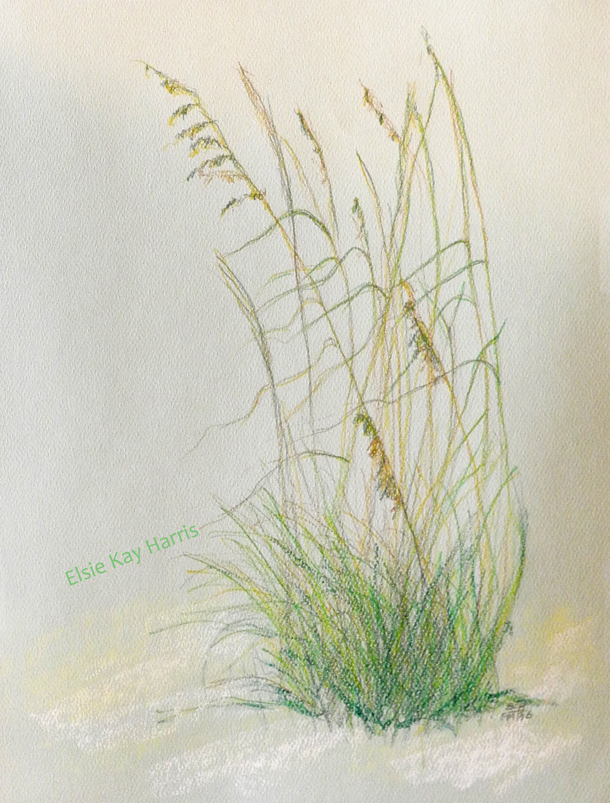 2052x2700 Sea Oats On The Sand Drawings