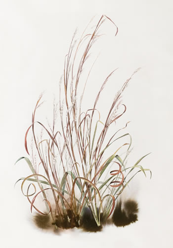 350x500 State Grass Little Bluestem