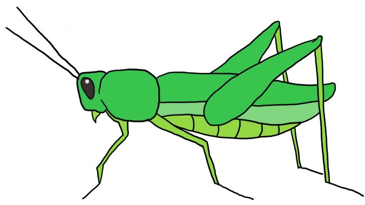 grasshopper drawing for kids at getdrawings com free for personal rh getdrawings com grasshopper clipart free grasshopper clipart png