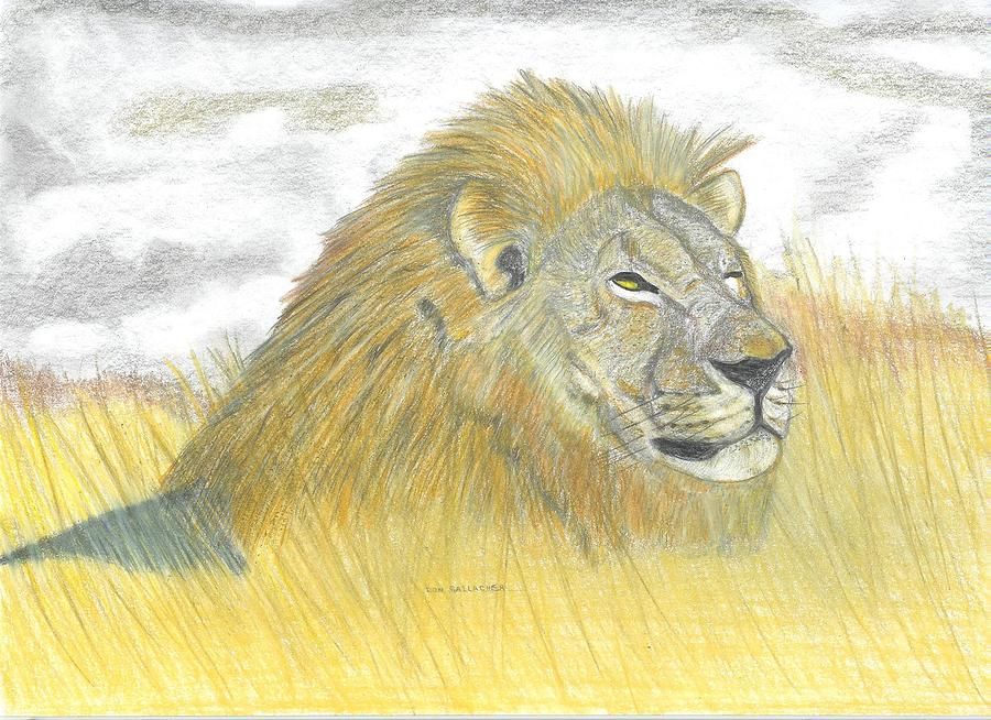 Line Drawings Of African Animals : Grassland animals drawing at getdrawings.com free for personal use