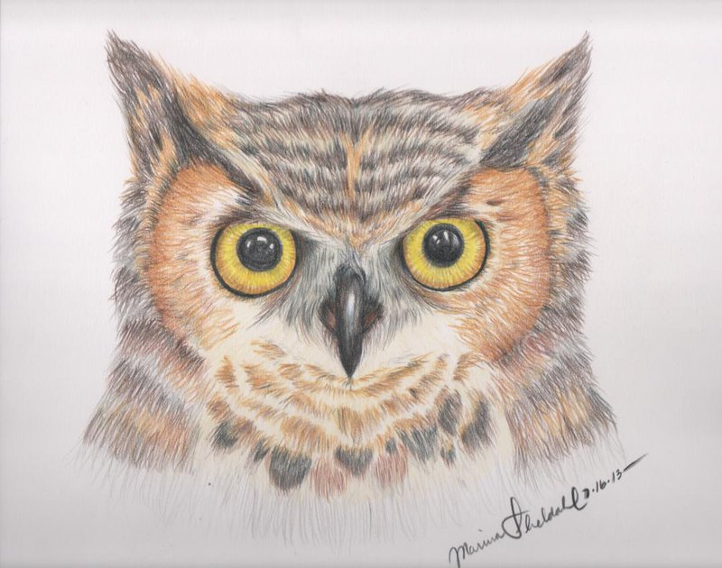 800x630 Great Horned Owl Sketch By Inuyashasgirl122