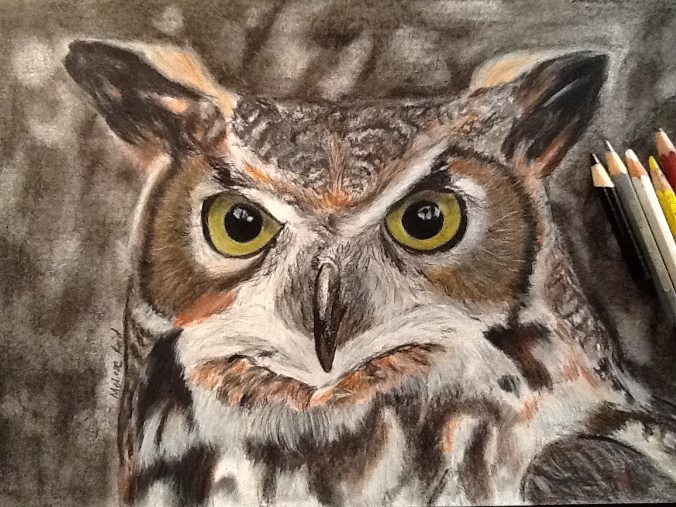 960x720 Great Horned Owl Drawing By Meliesereidmusic