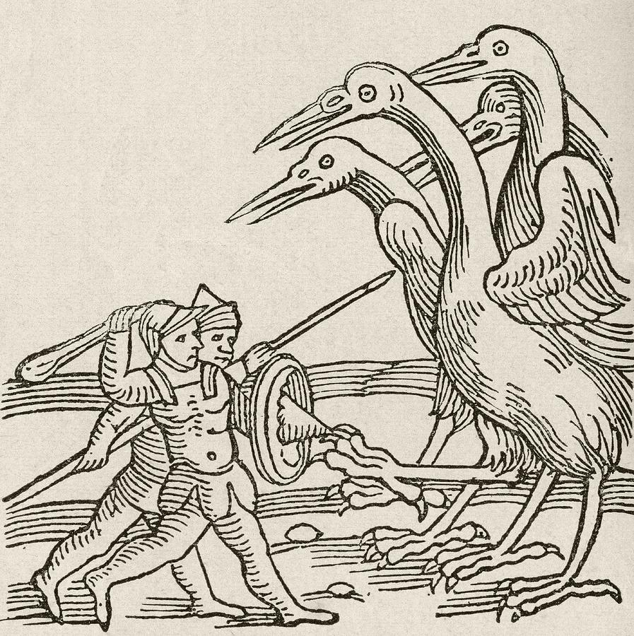 897x900 Fight Between Pygmies And Cranes. A Story From Greek Mythology