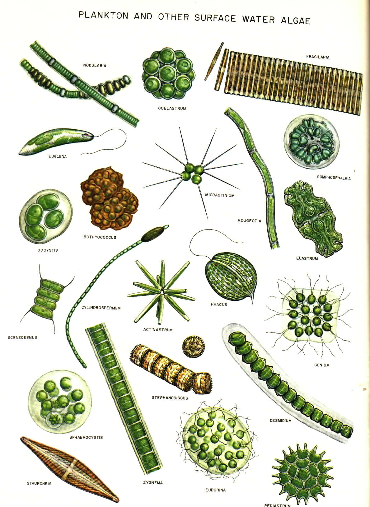 1189x1630 Algae Drawings