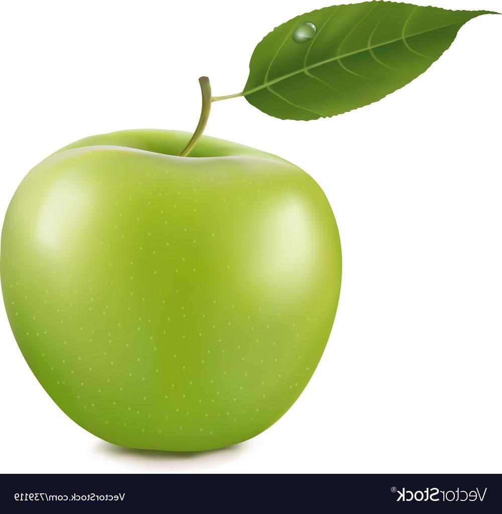 1000x1023 Top 10 Green Apple Vector Drawing