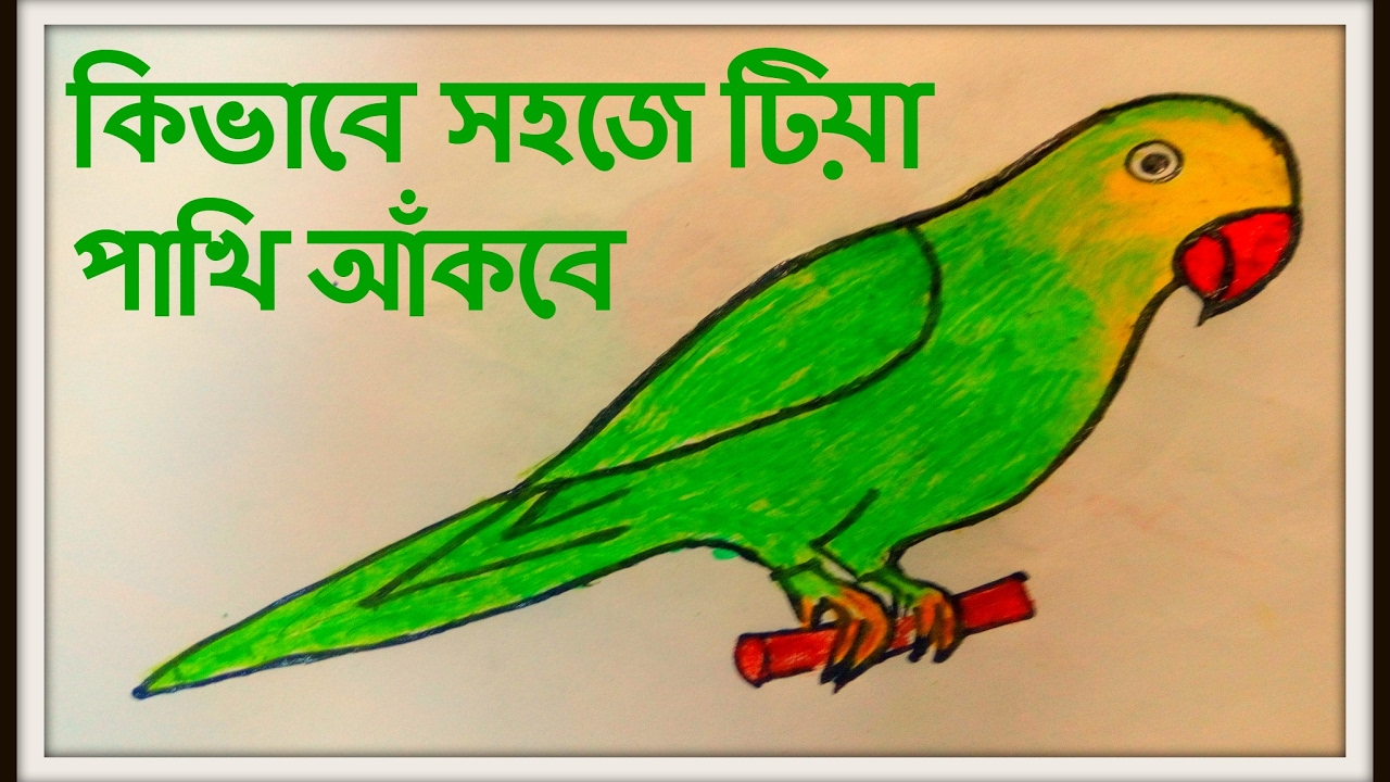 Green Parrot Drawing At Getdrawings Com Free For Personal Use