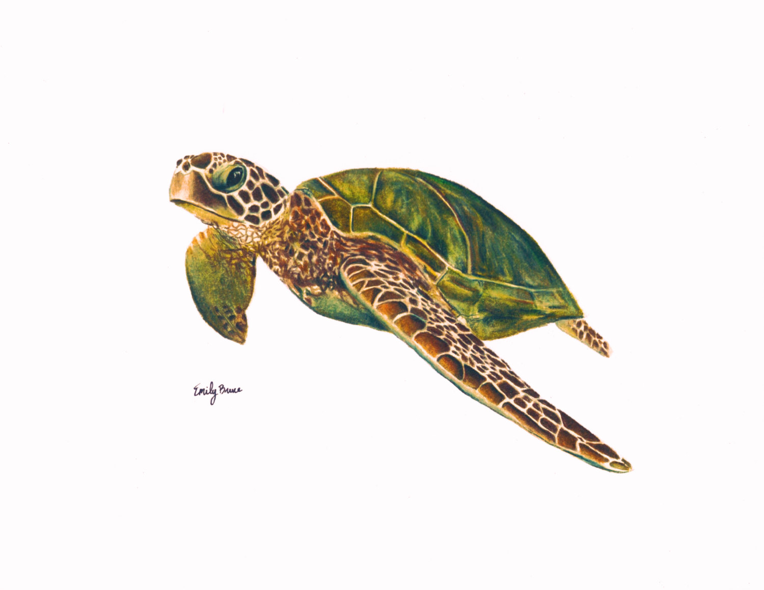 green sea turtle drawing at getdrawings com free for personal use