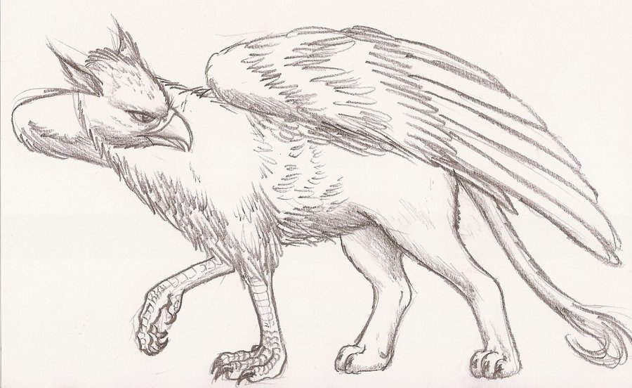 900x552 Griffin Drawings Downloads Wowow Draw, Drawing