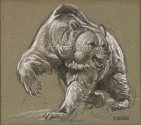 600x531 Drawings Of Grizzly Bears Drawings I Like Bears