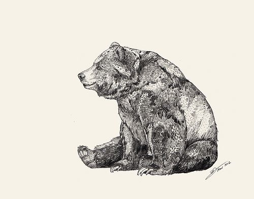 500x393 Drawing A Bear Standing Grizzly Bear Drawings Realistic How