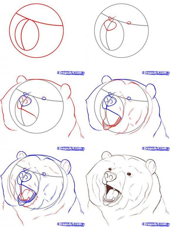 580x775 Lazy Bear Drawing