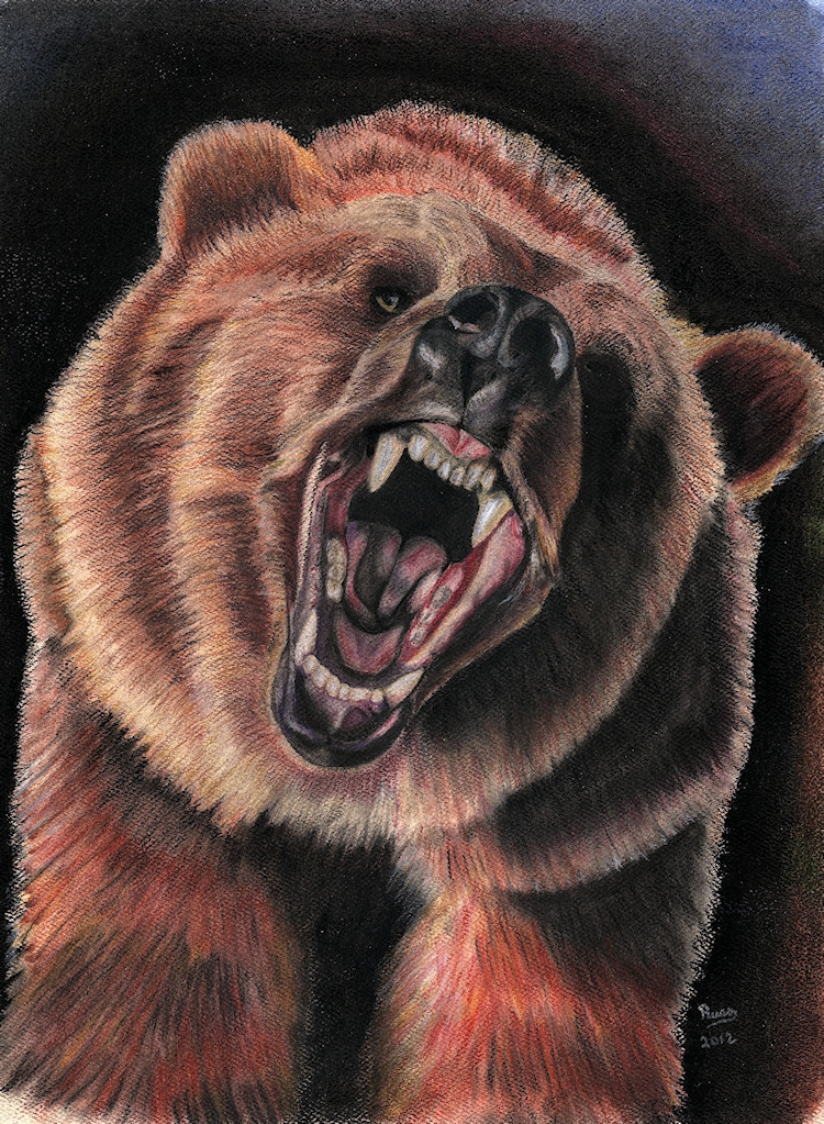 750x1023 Grizzly Bear