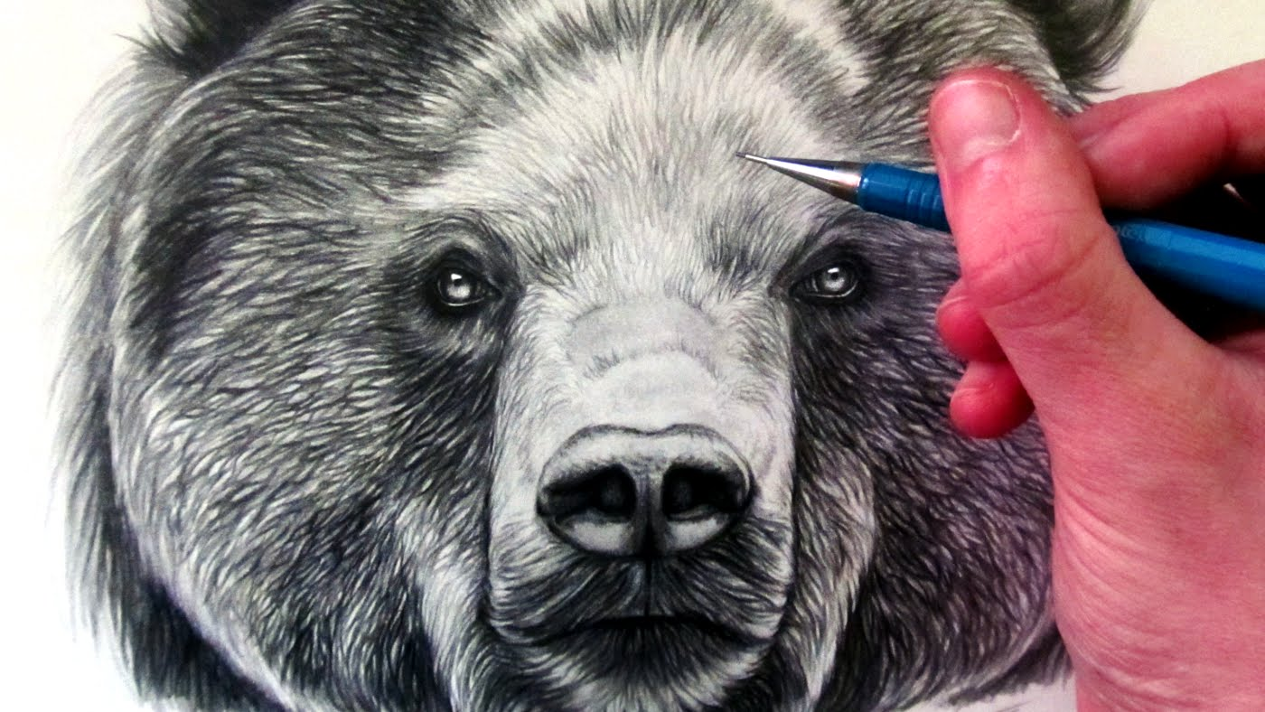 1400x788 How To Draw A Bear