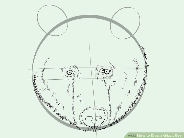 728x546 How To Draw A Grizzly Bear (With Pictures)