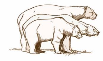 348x207 Short Faced Bear Lesson For Kids Size Amp Habitat
