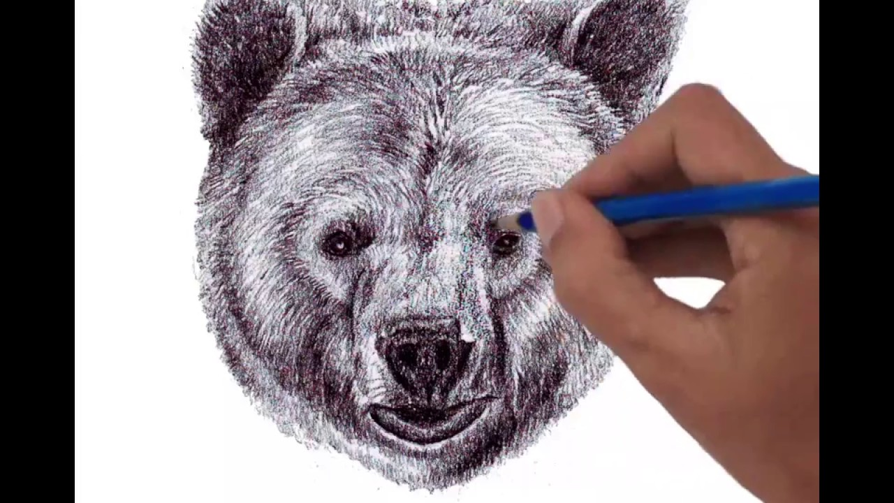 1280x720 Head Of Grizzly Bear Front View