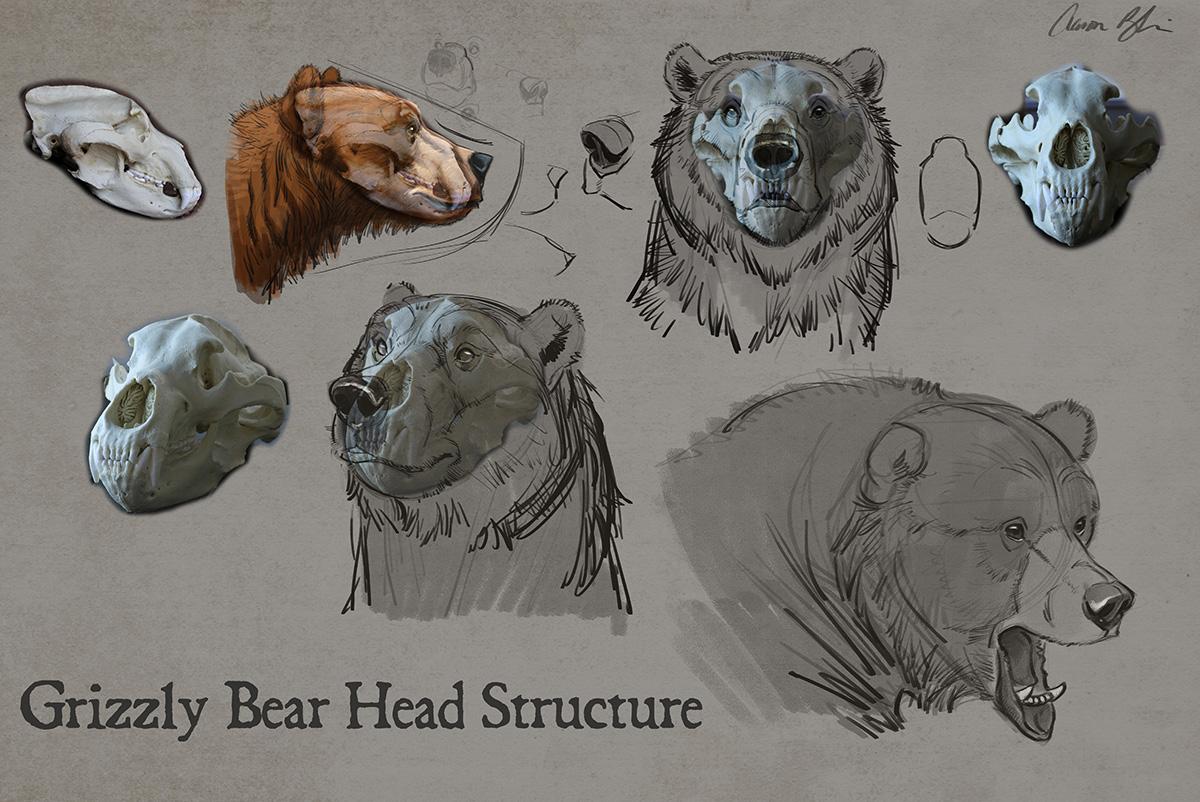 1200x802 How To Draw Bears