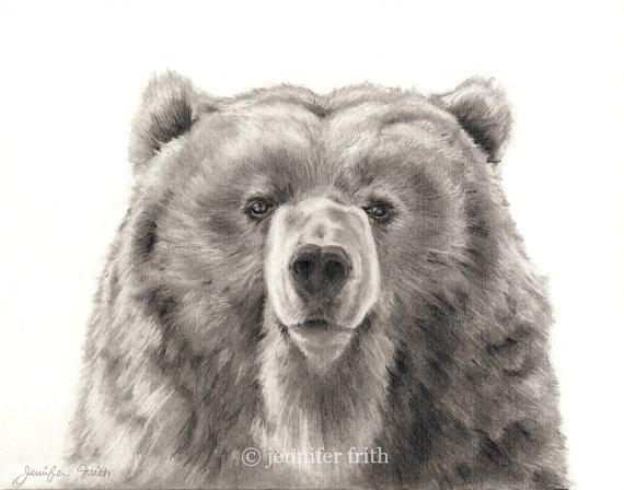 570x448 Bear Pencil Drawing Bear Print Bear Art 8.5 X 11 Print