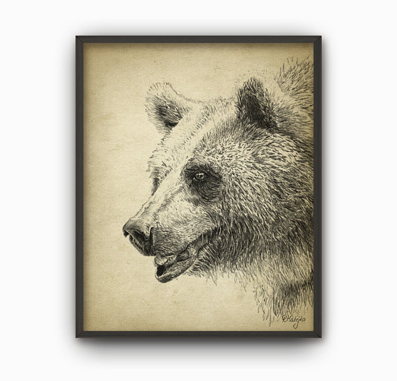 570x547 Grizzly Bear Art Print Grizzly Bear Pencil Drawing Print