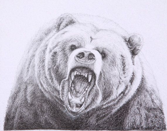 570x447 Grizzly Bear Drawings Grizzly Bear Charcoal Drawing Bears