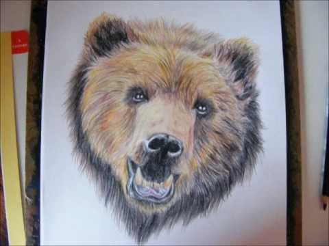 480x360 Grizzly Bear Portrait
