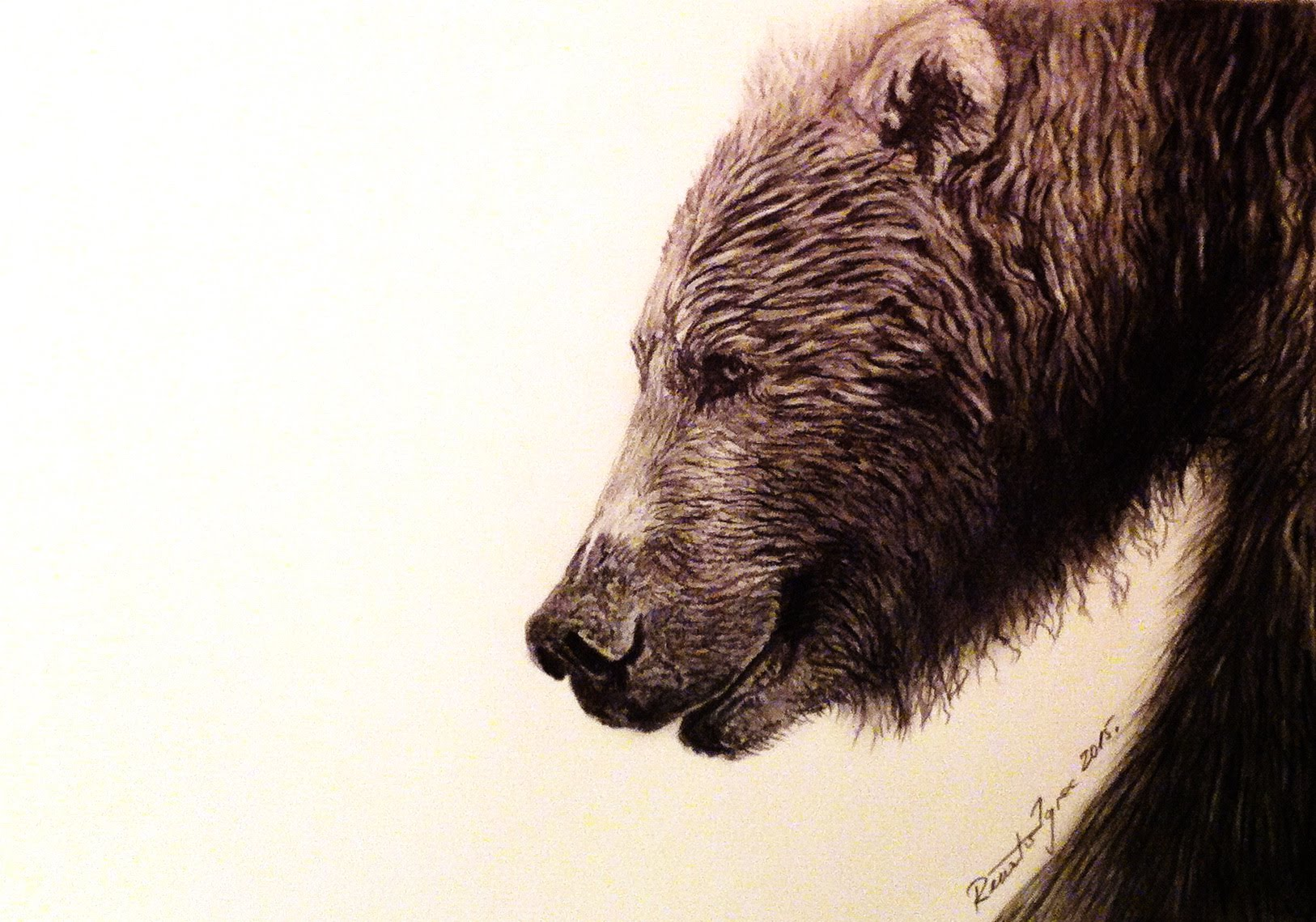 1626x1139 The Grizzly Bear