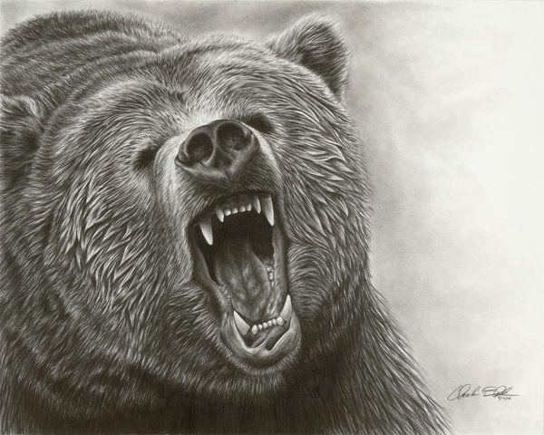 600x480 Grizzly Bear Drawings Grizzly Bear Roar Ii By Bears The Bears