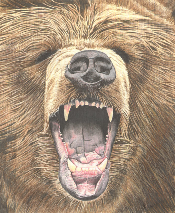 570x692 Growling Grizzly Bear Colored Pencil Drawing Illustrated By