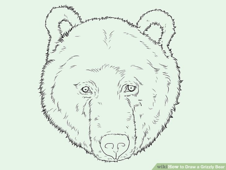 728x546 How To Draw A Grizzly Bear Face How To Draw A Grizzly Bear
