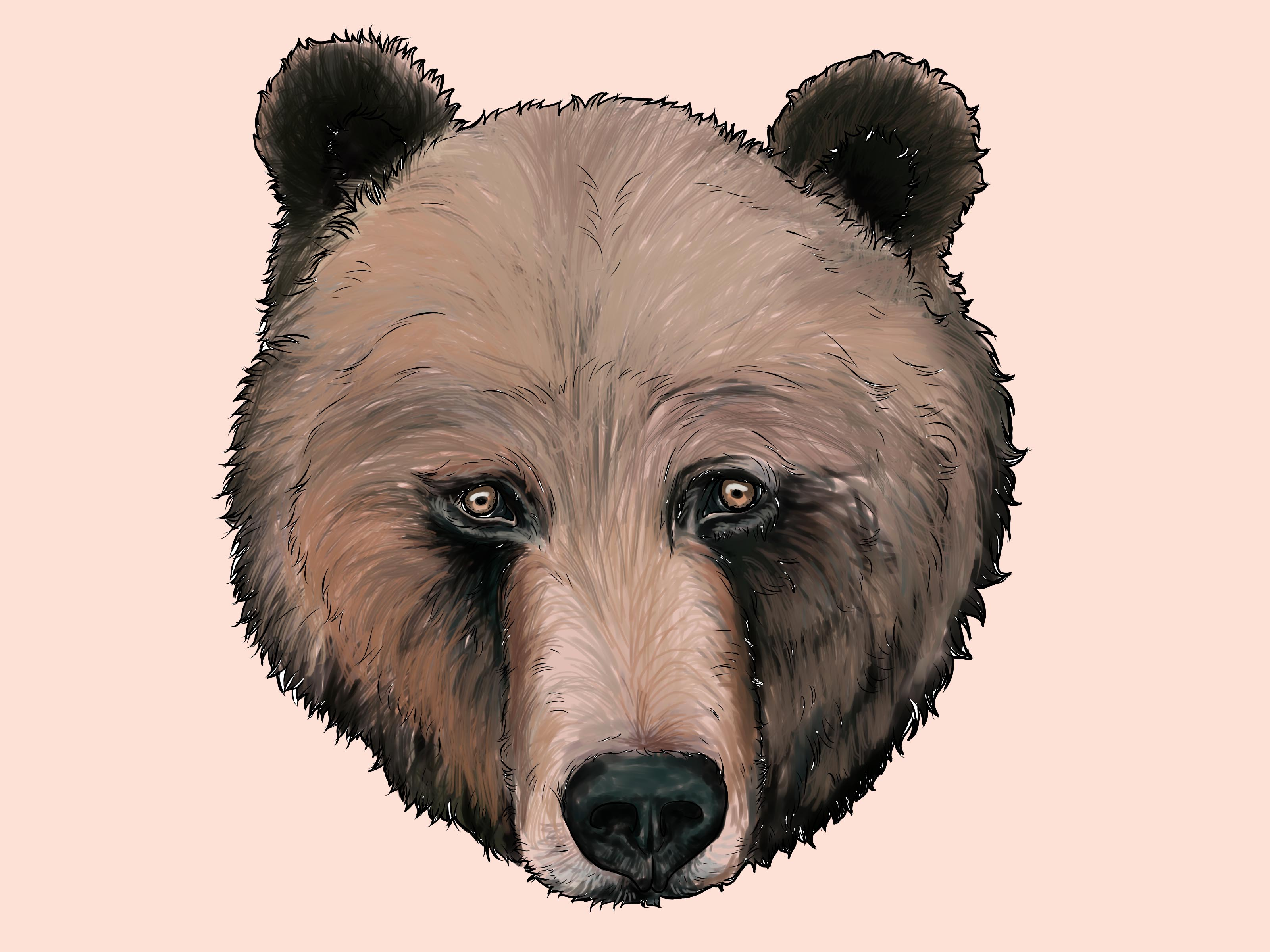3200x2400 How To Draw A Grizzly Bear (With Pictures)