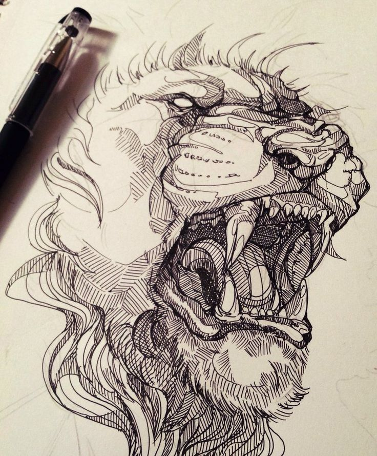 736x889 287 Best Lion And Tiger Images On Animal Kingdom, Big