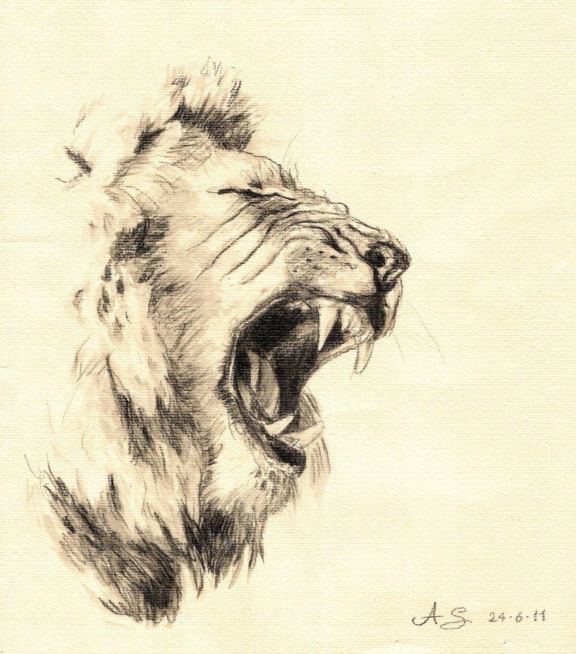 839x953 Pencil Drawn Lion Lion
