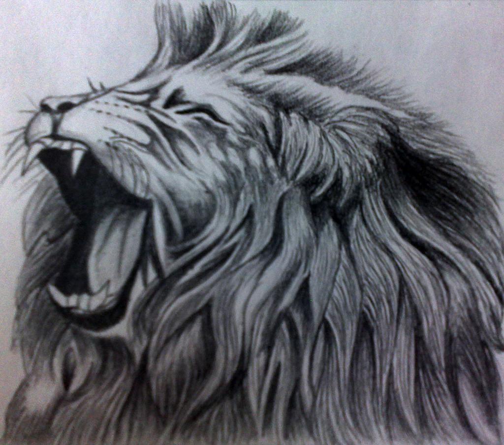 1024x904 Roaring Lion Pencil Drawing Lhel33246