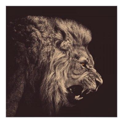 400x400 Lion Pencil Art Lion Roar Black And White Poster
