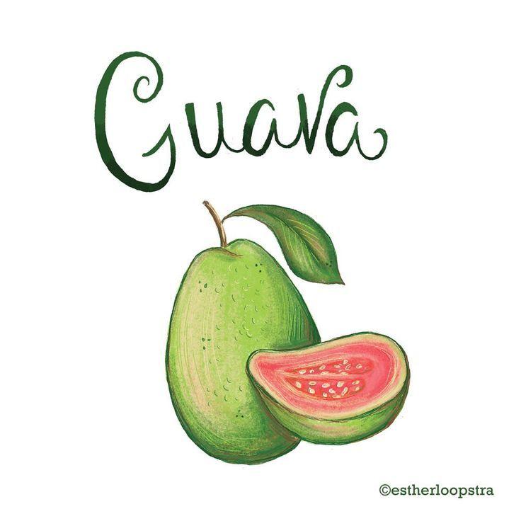 Guava Drawing at GetDrawings | Free download