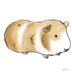 236x236 Guinea Pig Cartoon Drawing Guinea Pigs
