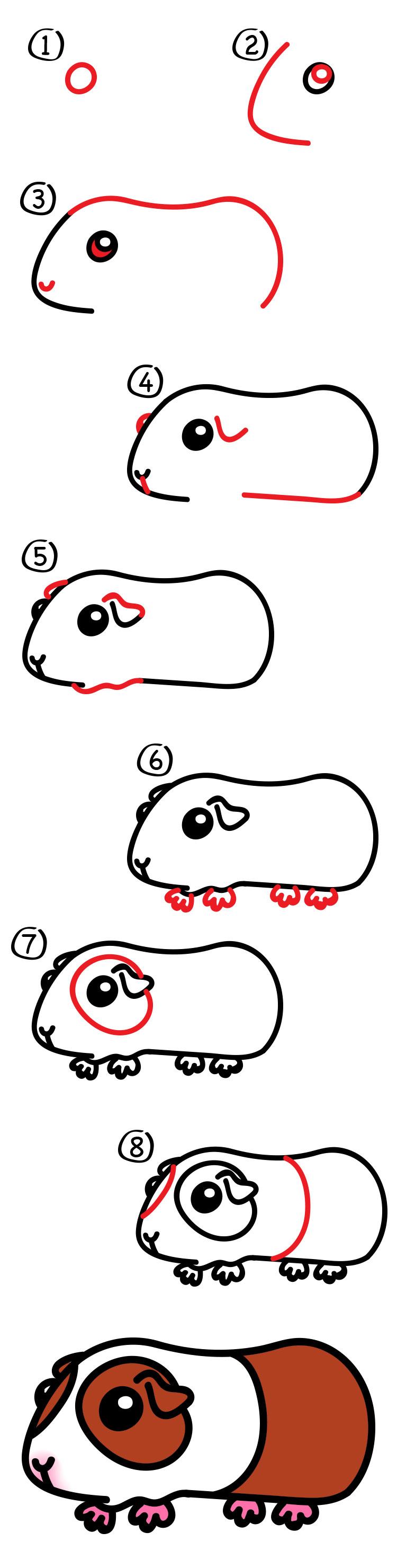 750x2959 How To Draw A Guinea Pig