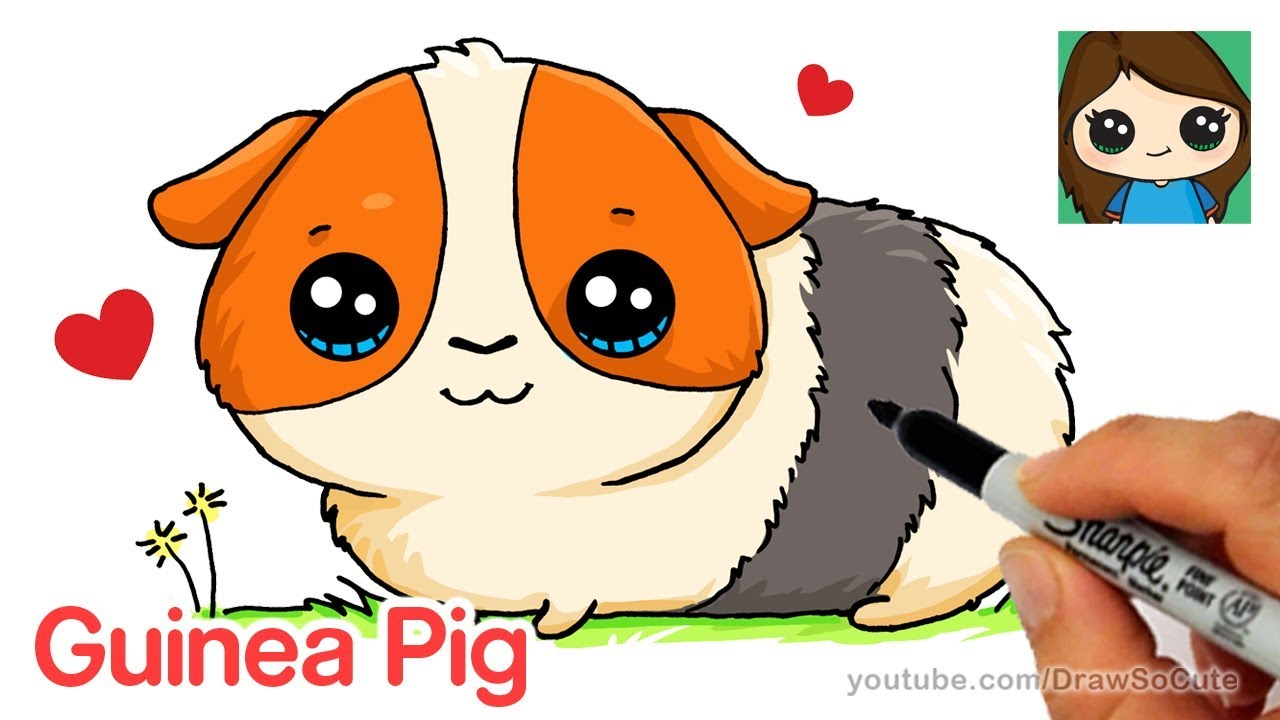 1280x720 How To Draw A Guinea Pig Easy And Cute