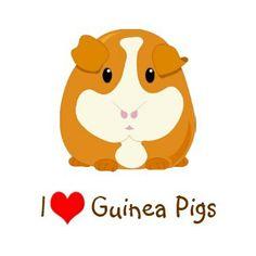 236x236 Guinea Pig Wallpaper