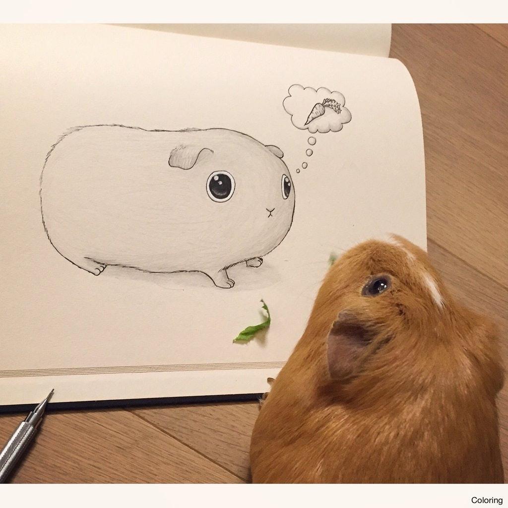1024x1024 Cute Guinea Pig Sketch By Vinceokerman D8nbgsc Drawing Coloring 9f