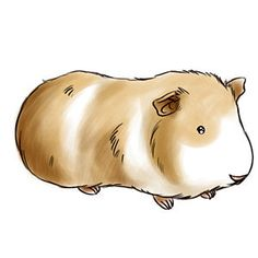 236x236 Draw A Guinea Pig Drawings, Animal And Cavy