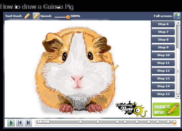 631x455 How To Draw Guinea Pigs Fluffy Piggies