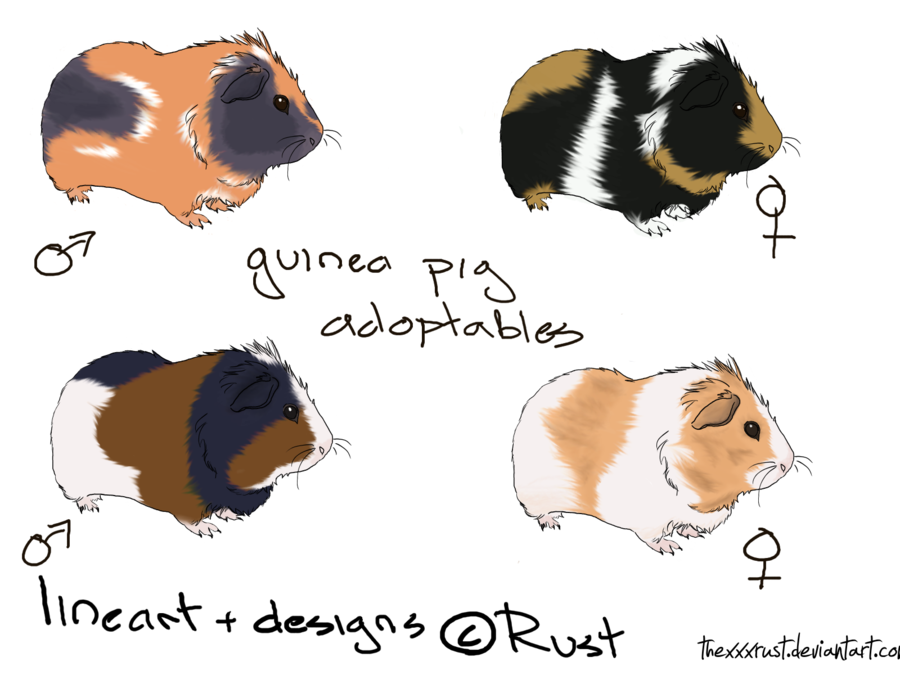 900x675 Guinea Pig Adoptables By Thexxxrust