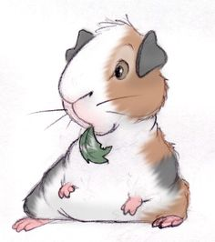 236x266 Guinea Pig Drawing